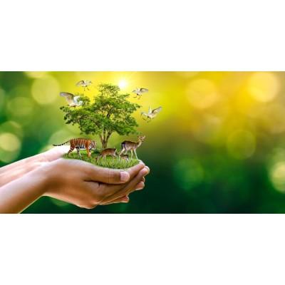 Hayvanlar ve Ağaç Temalı Doğa Duvar Kağıdı