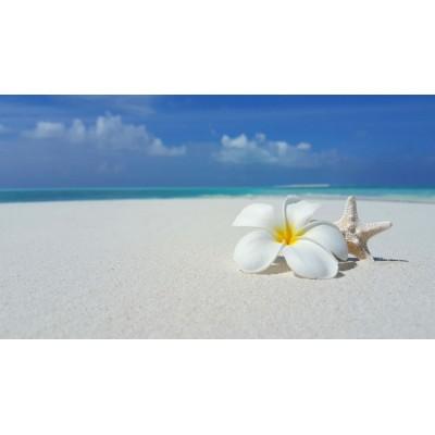 Deniz Yıldızı Çiçek ve Sahil Duvar Kağıdı