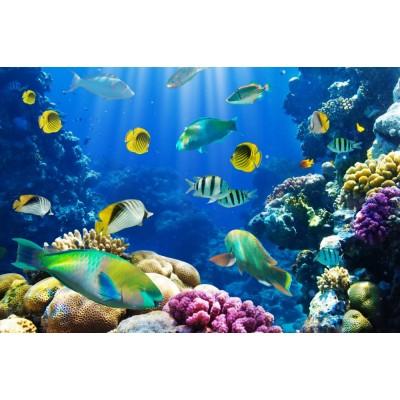 Deniz Altı Akvaryum Balıklar Duvar Kağıdı
