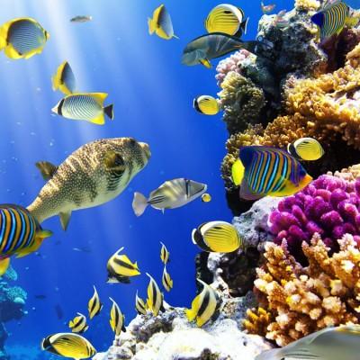 Deniz Altı Akvaryum Mercan Balıklar Duvar Kağıdı