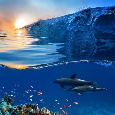 Dalga ve Deniz Altında Balık Duvar Kağıdı