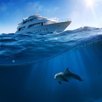 Yunus Balığı ve Yat Gemi Duvar Kağıdı