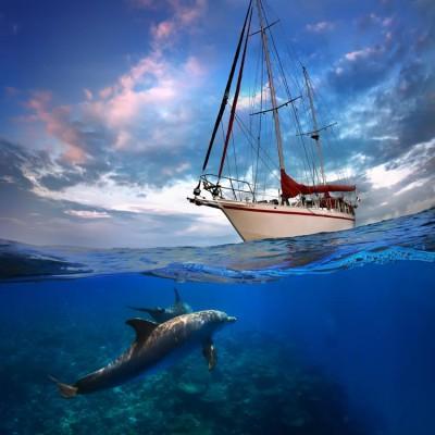 Deniz Altında Yunus Balığı ve Gemi Duvar Kağıdı
