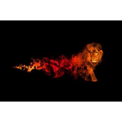 Kırmızı Ateşli Aslan Siyah Zemin Duvar Kağıdı
